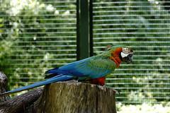 (ddsnet) Tags: bird birds zoo sony hsinchu taiwan 99  slt      sinpu hsinpu bird zoo zoobird  mygearandme  singlelenstranslucent 99v