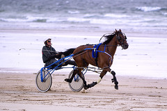 Sulky racing on Doolough strand (Frank Fullard) Tags: street ireland portrait horse irish beach sport strand race candid pont mayo harness doolough trotter sulky erris belmullet fullard geesala frankfullard