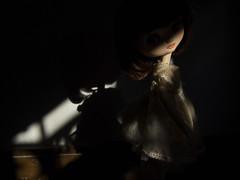 Poppy in shadows #04