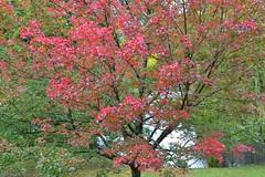 Queen Elizabeth Park (careth@2012) Tags: autumn tree landscape nikon scenery britishcolumbia d3100 nikond3100