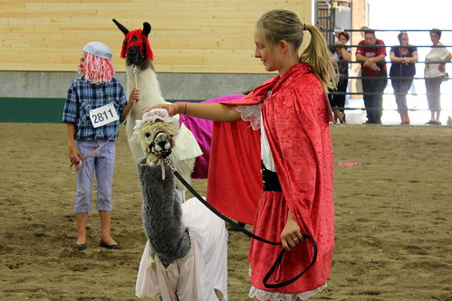 Llama costume contest at the Minnesota State Fair