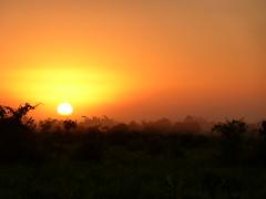Amazon Sunrise! (jordanmcconnell1) Tags: sun southamerica sunrise amazon bolivia jungle pampas rurrenabaque
