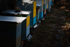 Colmenar - El Bierzo (Testigo Indirecto) Tags: bee honey miel abeja honeybee hive colmena apicultura apiary ocero colmenar elbierzo apiculture