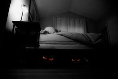 Bed (beelzebub2011) Tags: canada halloween vancouver britishcolumbia monsters