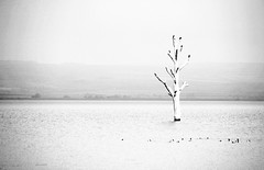 Drowned (Katka S.) Tags: light bw white black tree water birds high key alone basin drown drowned moravia morava nov plava mlny vodn ndr