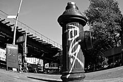Sen4 (Now It's Real!) Tags: new york city nyc newyorkcity blackandwhite ny newyork brooklyn train graffiti nikon graf tags graff bk td allcity sen4 bkay sen4td d3100 nikond3100