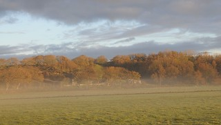 Ein nebliger November-Morgen in Süderstapel an der Eider (52)