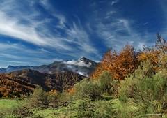 Contraste de colores (anpegom) Tags: autumn otoo len castillaylen parquenacionalpicosdeeuropa anpegom potd:country=es