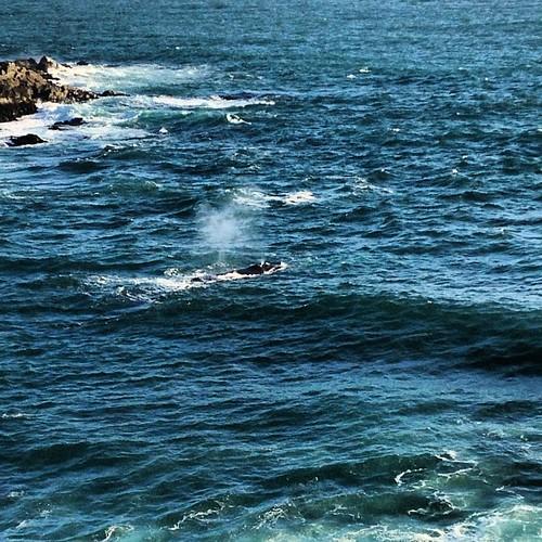 whale#love #TagsForLikes #TFLers #tweegram #photooftheday #20likes...