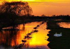March 14th 2007 Fen Sunset (saxonfenken) Tags: pregamewinner 2007 sunset twilight dusk drain fens cambridgeshire whittlesey swan reflection thumbsup storybookwinner gamesweepwinner agcgwinner challengeyou yourockwinner perpetual friendlychallenges 9981sun 9981
