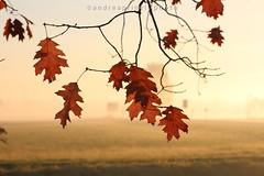 Triste autunno (andreaprinelliphoto) Tags: canon nebbia autunno pianura melegnano padana andreaprinelliphoto andreaprinelli prinelli