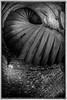 Ft Point Stairway (kgorlen) Tags: 2013 award ca ftpoint honorablementionmonochrome photochromeimagefest sanfrancisco
