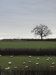 Saturday Morning (ART NAHPRO) Tags: england house field rural sussex sheep farm cottage vision:outdoor=0727