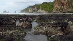 Motukiekie, Te Waipounamu, Aotearoa (New Zealand Wild) Tags: aotearoa tewaipounamu westcoast wilderness motukiekie seaside scenic seashore seaweed starfish bullkelp scenery seascape rocks rockpools cliffs coast coastal coastline stevereekie southisland stevereekiephotography newzealandphotography newzealandgeographic nationalgeographic newzealand nature newzealandnature newzealandwild wild newzealandnaturephotos newzealandpics naturephotos naturepics native natural beautiful beauty wonderlandaotearoa scenicnewzealand wildnewzealand newzealandnaturephotography naturephotography stevereekiephotos wildaotearoa photos photography greatnature stunning gorgeous