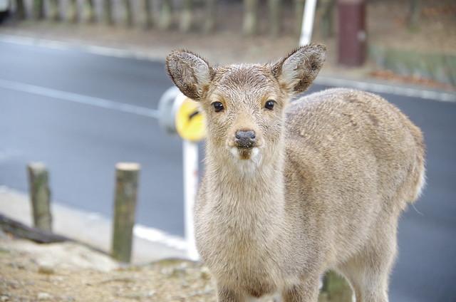 【ご利益別】幸せを呼ぶ奈良県のパワースポット|観光におすすめ
