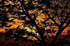 The Memory Of The Trees (Anna Kwa) Tags: trees nature sunrise singapore silhouettes morningsun parkconnector bikingtrail