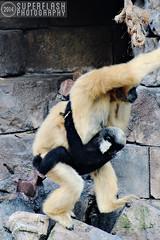 Mama & Baby (superflash) Tags: animal animals orlando meerkat florida kingdom disney disneyworld kangaroo monkeys hippopotamus waltdisneyworld themepark spoonbill