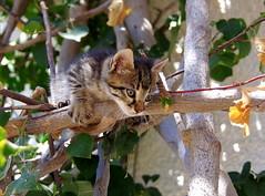 Tunisia 70 (Wy@rt) Tags: cat kitten kat chat tunisia djerba tunesi tunesie midoun djerbamenzel