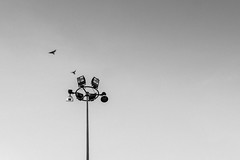 Fly away. (ruksit sariman) Tags: light lamp field birds sport electric metal bulb modern fly big high construction energy day power outdoor background steel spotlight pole equipment electricity halogen tall isolated floodlight oblect