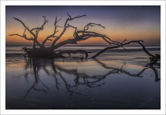 Driftwood Beach Tree (Fraser Ross) Tags: driftwood driftwoodbeach goldenisles georgia romanticbeach firstlight deadtrees drowned swallowed sunriseatthebeach nikond800 nikon2470mm topazsoftware