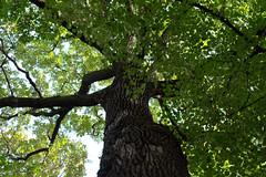 Rima Dadenji, each leaf is a prayer, 2016 (Rima Dadenji) Tags: green tree trees leaf leaves autumn fall season foliage nature environment ecology agroforestry permaculture ecosystem fujifilmxt10 fuji fujifilm forest woods agroecology