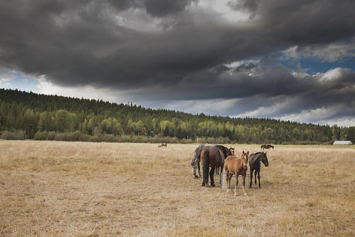 A peaceful valley under stormy skies.   #wpguestranch #wherewillyouwonder #duderanch #guestranch #mareandfoal #aqha #officialaqha #2016foal #idaho_explored #idahoexplored #visitidaho #visitpnw #visitboise