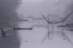Winter Morning (shah_jaman) Tags: wintermorning winterseason morning foggymorning fog bangladesh beautifulbangladesh beautyofnature outdoor jamansphotography