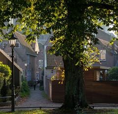 Brielle nog niet echt herfst-10.jpg (Leen Poldervaart) Tags: nederland brielle tegenlicht raas wandelen herfst zuidholland nl canon600d canonefs1755mmf28isusm boom tree zonlicht sunlight