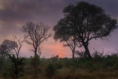 Bushveld sunrise (Sheldrickfalls) Tags: sunrise mistysunrise krugersunrise krugernationalpark kruger krugerpark mpumalanga southafrica phabeni phabenigate
