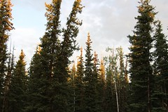 Early Morning (demeeschter) Tags: canada yukon territory klondike highway lake mountain scenery landscape nature wildlife fire forest river minto resort bald eagle dawn sunrise
