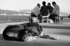 Loneliness (kayisoglu) Tags: istanbul bosphorus dog lonely loneliness street