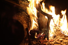 Day 53 (inbar_stern) Tags: fire camp wood night outside outdoor nature orange 365 365daysproject 365dayschallenge 365challenge 365project 365days