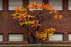 Autumn Tristesse (L I C H T B I L D E R) Tags: fall herbst autumn colours colors farben deutschland germany seasons jahreszeiten cologne haus house tristesse melancholie
