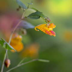 (donna leitch) Tags: bud flower dof nature canon donnaleitch macro 100mm