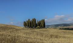boschetto di cipressi (jazz_0902) Tags: cipressi valdorcia nature natura italy italia tuscan tuscany trees travel toscana blue skyline sky