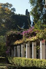 Parque de Maria Luisa (3) ({House} Photography) Tags: spain seville sevilla andalusia europe travel photography canon 70d 24105 f4 housephotography timothyhouse parque de maria luisa park garden walkway trees
