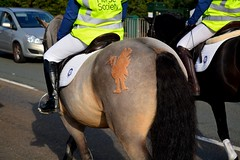 Liver bird engraved on the back of the horse (napoleon666uk) Tags: liverpool international horse festival liverpoolinternationalhorsefestival horseshow echoarena animal parade