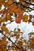 IMG_8987 (Geoff_B) Tags: badockswood bristol walkinthewoods autumn november unprocessed unedited