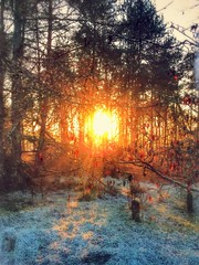 Sunrise (frankhimself) Tags: nature scenery hill grass glistening sunlight sun trees scotland kilsyth croyhill foliage leaves red yellow icy freezing frost ngc stunning sunrise landscape country views