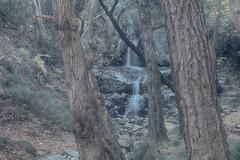 Troodos Geopark (31) (Polis Poliviou) Tags: polispoliviou polis poliviou   cyprus cyprustheallyearroundisland cyprusinyourheart yearroundisland zypern republicofcyprus  cipro  chypre   chipir chipre  kipras ciprus cypr  cypern kypr  sayprus kypros polispoliviou2016 troodosgeopark troodos mediterranean nicosia valley life nature forest historical park trekking hiking winter walking pine pines prodromos limassol paphos fall autumn geopark kakopetria
