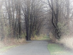 The Bridle Path (Lana Pahl / Country Star Images) Tags: forestwhispers foreverautumn petalsandfrost autumn rainsnowfog ilovenature