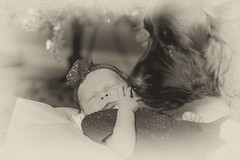 Newfy and Baby (JustinDoles) Tags: baby newfoundland dog sepia nikon 50mm bw