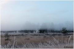 mistige ochtend (HP019835) (Hetwie) Tags: ijs nachtvorst natuur strabrechtseheide ochtend kou nature sunrise zonsopkomst rijp mist strabrecht fog heide ice heather frost frozen vorst lierop noordbrabant nederland