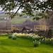 Enjoying daffodils