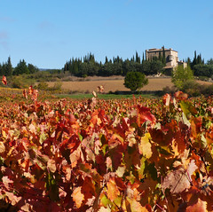 Vineyards, Chateau de Serres (Niall Corbet) Tags: france occitanie roussillon languedoc aude vineyard chateaudeserres chateau serres vine vignoble autumn yellow red