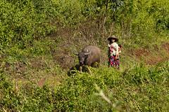 20161014-IMG_1978 (Konrad K. M.) Tags: myanmar kalaw shan