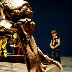 20161206_110636-2 (durr-architect) Tags: tyrannosaurus rex trex town skeleton naturalis nature museum leiden exhibition fossil consevation carnivorous dinosaur montana black hills institute