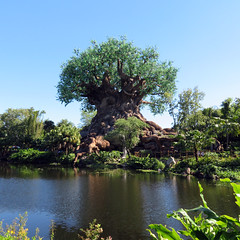 TreeOfLife_005 (*Ice Princess*) Tags: nature animalkingdom disney orlando florida disneyworld waltdisneyworld amusementpark tree treeoflife