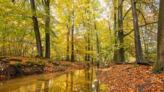 Autumn in the forrest (Alex Verweij) Tags: 17mm hierden beek water canon 5d autumn herfst kleur blad leaf bladeren color kleuren colors stromen alexverweij yellow geel boom bomen tree trees holland netherlands