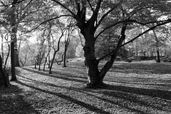 AfternoonLight I-bw (Joe Josephs: 2,861,655 views - thank you) Tags: centralpark nyc newyorkcity travel travelphotography urbanlandscapes urbanparks landscape landscapephotography outdoorphotography blackandwhitephotography blackandwhite landsacapes